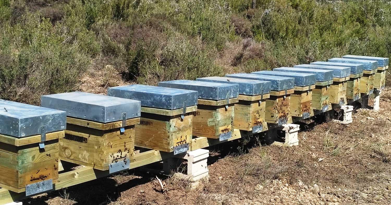 Foto de caixes que contenen eixams on es produeix la mel